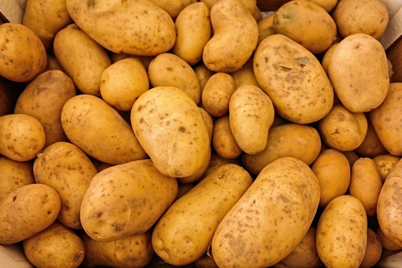 посадить картошку под мотоблок